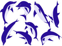 Animal dolphins Royalty Free Stock Images
