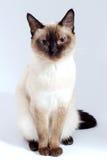 Animal doméstico Imagenes de archivo