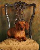 Animal doméstico foto de archivo libre de regalías