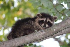 Animal doméstico al aire libre nombré el whisky Fotografía de archivo