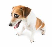 Animal doméstico culpable Foto de archivo libre de regalías
