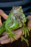 Animal doméstico de la iguana Imágenes de archivo libres de regalías