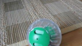 animal doméstico del hámster en la rueda, bola plástica dentro del hogar almacen de video