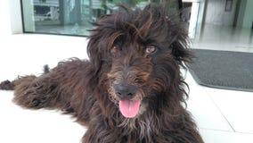 Animal doméstico del perro fotos de archivo