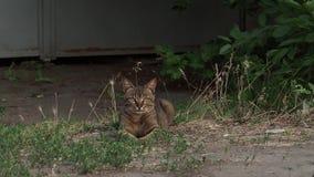 Animal doméstico en la reclinación de la calle metrajes