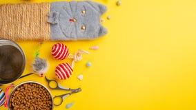 Animal doméstico, gato, comida y accesorios del gato viviendo endecha plana, con el espacio para el diseño, en fondo amarillo foto de archivo libre de regalías