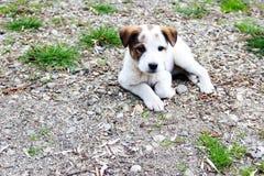 Animal doméstico lindo Foto de archivo libre de regalías