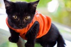 animal doméstico lindo del gatito Fotografía de archivo