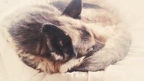 animal doméstico peludo el dormir Imagen de archivo libre de regalías