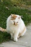 Animal doméstico, un gato Fotos de archivo libres de regalías