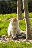 Animal doméstico, un gato Imagen de archivo