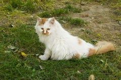 Animal doméstico, un gato Imágenes de archivo libres de regalías