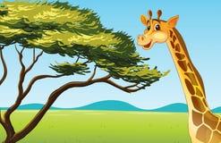 Animal dos desenhos animados ilustração stock