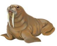Animal dos desenhos animados - morsa Imagem de Stock