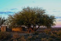 Animal drinking ponds under thorn trees. Farm animal drinking ponds under two thorn trees in an arid and dry landscape image in landscape format with copy space Stock Photos
