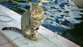 Animal dulce del gato cerca del mar metrajes