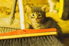 Animal effrayé Images libres de droits