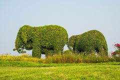 Animal elephant trees in the park Stock Photos