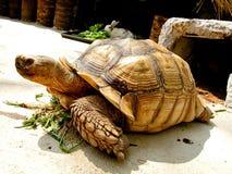 Animal em Tailândia Fotos de Stock Royalty Free