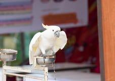 Animal em Tailândia Imagens de Stock Royalty Free