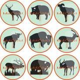Animal em uma vista Fotos de Stock Royalty Free