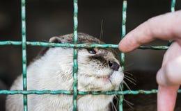 Animal en jaula Foto de archivo libre de regalías