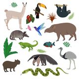 Animal en tucán animalista salvaje del tapir del capybara del carácter del mamífero del vector de Suramérica en el ejemplo meridi ilustración del vector