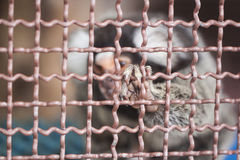 Animal en una jaula Fotos de archivo