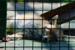 Animal enjaulado Foto de archivo libre de regalías