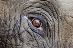 Animal Eye Royalty Free Stock Image