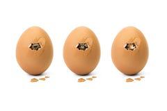 Animal eye in broken egg Royalty Free Stock Images