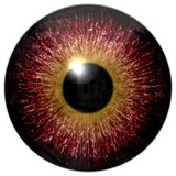 Animal eyeball 3d texture isolated. White background, yellow round and black pulpil stock photos
