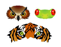 Animal Eyes. Vector image of Owl, Frog and Tiger Eyes Royalty Free Stock Photos