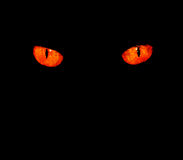 Animal eyes in black. Serious, evil animal eyes stare at something in black Royalty Free Stock Images