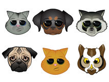 Animal Face Icons. Dog, Cat, and Other Animal Faces Stock Photo