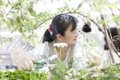 Animal familier Images libres de droits