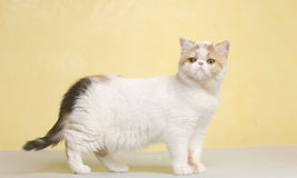 animal familier animal de chat Photos libres de droits