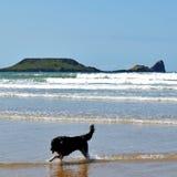 Animal familier appréciant la mer Photos libres de droits