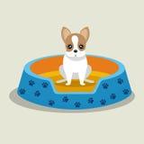 animal familier bleu de lit de chiot de terrier de Boston Photographie stock libre de droits