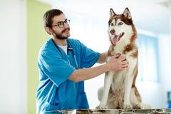 Animal familier care Photo libre de droits