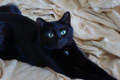 Animal familier - chat noir heureux Photographie stock