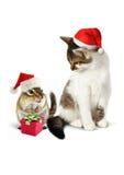 Animal familier comique de Noël, tamia drôle et chat avec le chapeau de Santa Photo stock