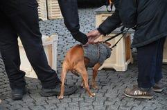 ANIMAL FAMILIER D'AMOUR DE PERSONNES ET DE CHIEN Photos stock