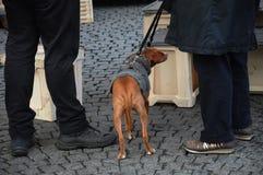ANIMAL FAMILIER D'AMOUR DE PERSONNES ET DE CHIEN Photo stock