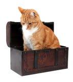 Animal familier dans le coffre de trésor Photographie stock