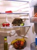 Animal familier dans le réfrigérateur Image stock