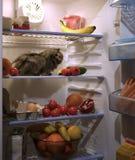 Animal familier dans le réfrigérateur Images stock
