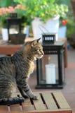 Animal familier de Chambre dans le patio Photographie stock libre de droits