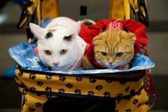 Animal familier de chat Photographie stock
