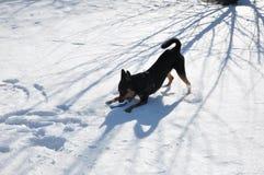 Animal familier de chien jouant sur la neige d'hiver Photo libre de droits